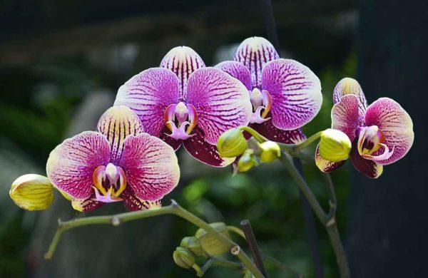 Florile pe care TREBUIE să le ai în casă: Absorb umiditatea și toxinele din aer