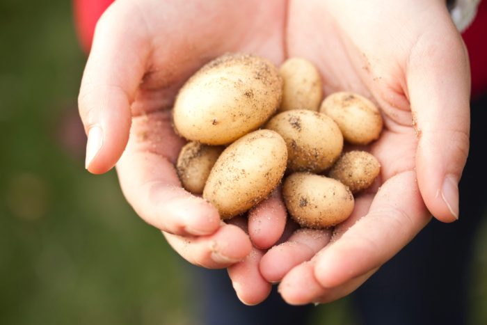 Cum să păstrezi pentru mai mult timp prospețimea cartofilor