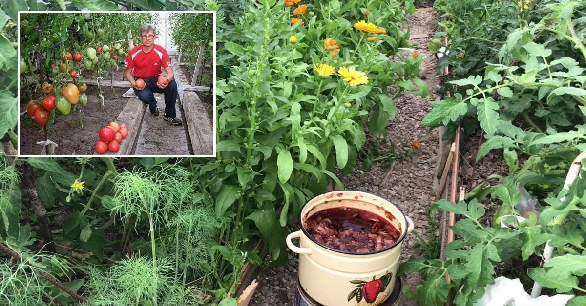 De ce grădinarii cu experiență adună coji de ceapă!