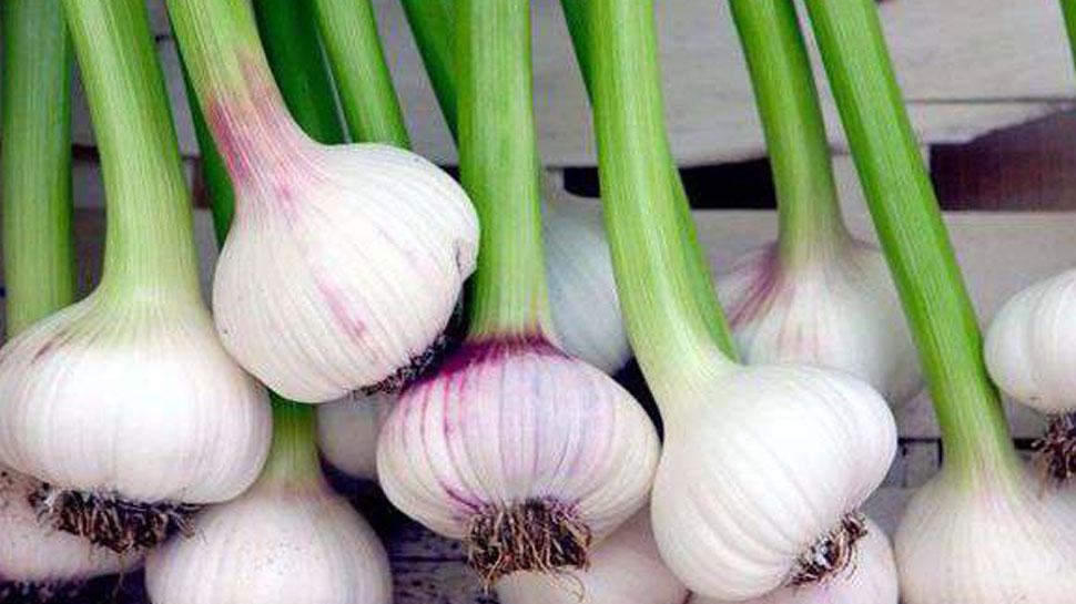 Usturoiul verde – ce conține și la ce e bun