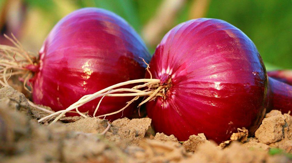 De ce să incluzi ceapa roșie în dieta ta – beneficii importante pentru sănătate